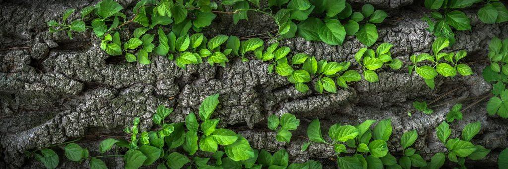 feuilles-terre-tarifs